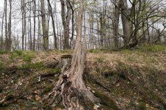 Alsbacher Wald Spaziergang