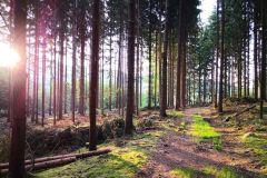 Märchenwaldstimmung