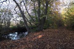 Trailig durch den Gernsheimer Wald