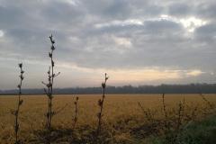 Morgentlicher Nebel auf den Felder bei Maria Einsiedel