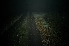 Earlybird im dichten Nebel