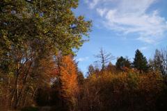 Der Herbst von der schönen Seite