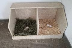 Ein neues Nest für den Hühnerstall