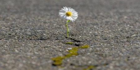 Resilienz Pflanze in Aspahlt